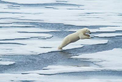 Arctic Posters