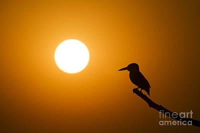 Kingfisher Photographs