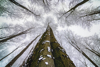 Designs Similar to Looking Up by Tom Pavlasek