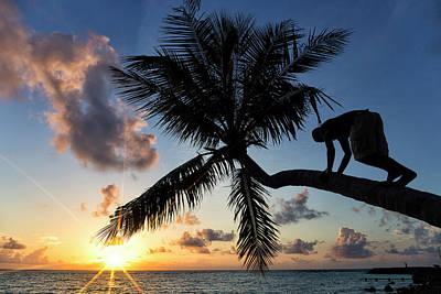 Designs Similar to Man Climbed A Palm Tree At Dawn