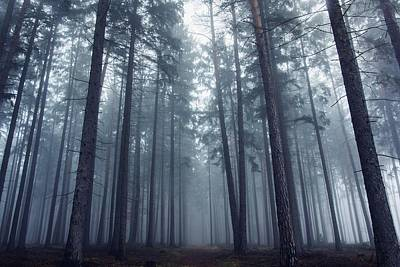 Designs Similar to Mysterious Foggy Forest.