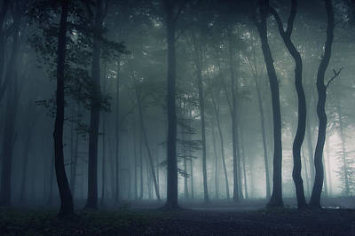 Designs Similar to Mysterious Forest by Photocosma