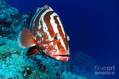 Swordfish Photographs