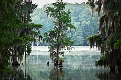 Designs Similar to North Florida Cypress Swamp