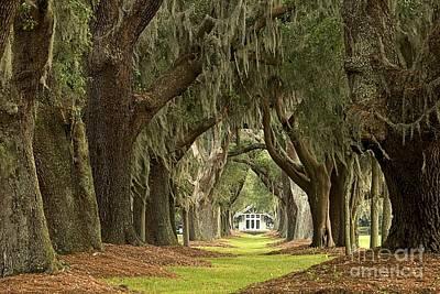 Georgia Plantation Photographs