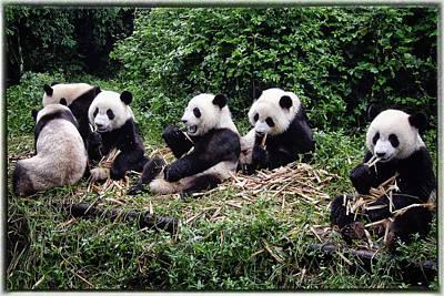 Bamboo Photographs Original Artwork