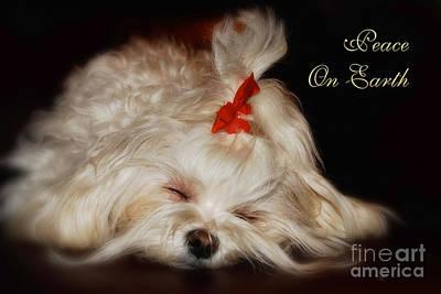 Maltese Dog Christmas Cards Art