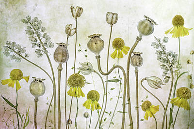 Designs Similar to Poppies And Helenium