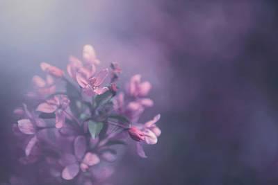 May Flower Art