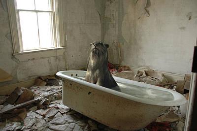 Otter Mixed Media