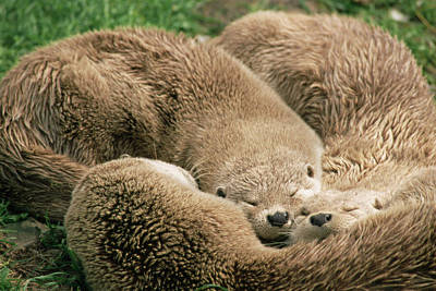 Designs Similar to Sleeping Otters