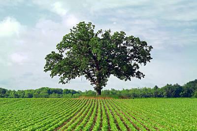 Big Tree Photographs