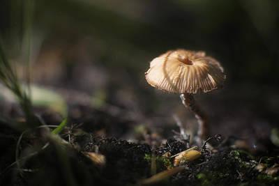 Fungi Posters