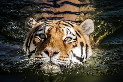 Designs Similar to Tiger by Radoslav Strestik
