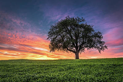 Designs Similar to Tree With Ladder At Sunset