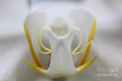 Jared Shomo: Plant Art