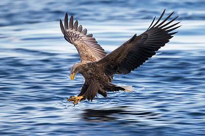 Designs Similar to White-tailed Eagle