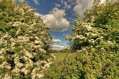 Designs Similar to Whitethorn Hedge by John Quinn