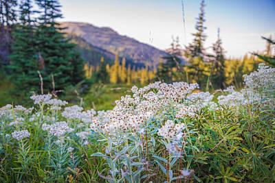 Designs Similar to Wild Flowers