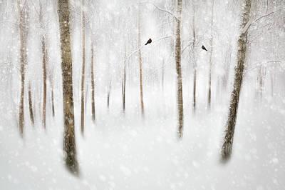 Designs Similar to Winter Birches