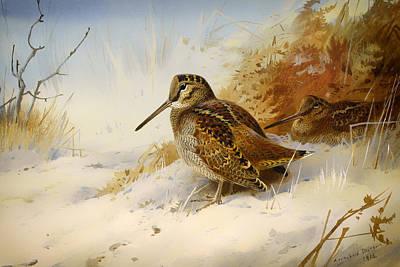 Woodcock Art Prints
