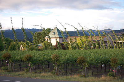Blowing Grape Vines Vineyards Rustic House Winery Napa California Ca Wine Photographs