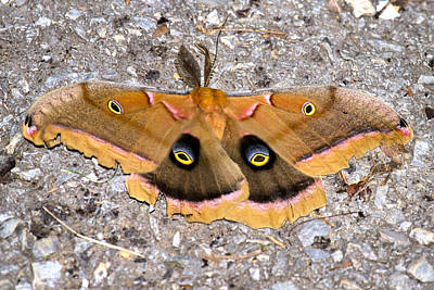 Designs Similar to Polyphemus Moth by Betsy Knapp