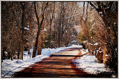 Leaning Trees Over Road Prints