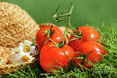 Designs Similar to Summer Tomatoes