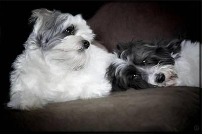 Love Between Dogs Prints