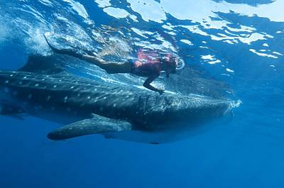 Designs Similar to Whale Shark And Diver