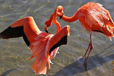 Designs Similar to Flamingo Love Dance