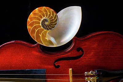 Designs Similar to Nautilus Shell On Violin 2