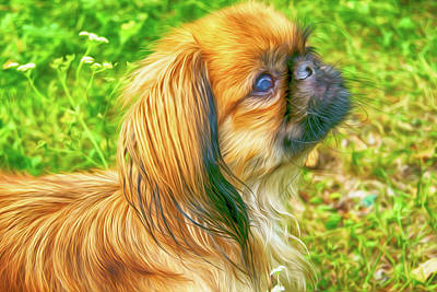 Designs Similar to Pekinese - Dog