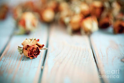 Designs Similar to Dried Roses by Kati Finell