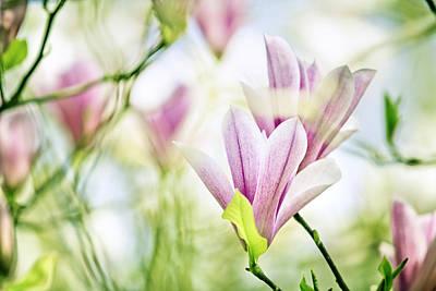 Designs Similar to Magnolia Flowers
