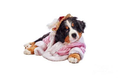 Designs Similar to Bernese Mountain Dog Puppy