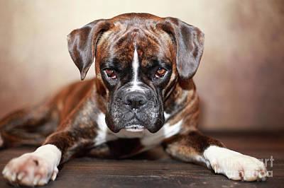 Designs Similar to German Boxer Dog by Jana Behr