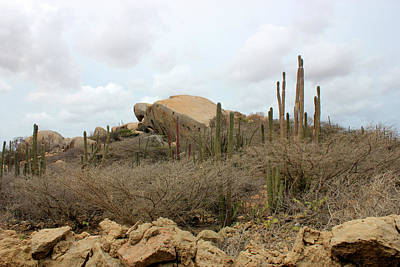 Desert Island Mixed Media