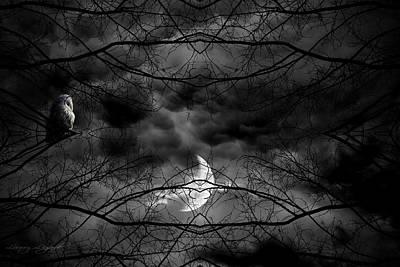 Gloomy Photographs