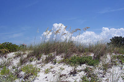 Designs Similar to Beach Grasses by Evelyn Patrick