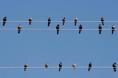 Bird Migration Photographs Original Artwork