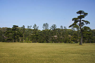 Designs Similar to Bonsai Tree by Brian Kamprath
