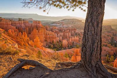 Ponderosa Pine Photographs