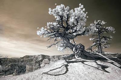 Tree Root Prints