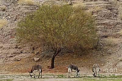 Designs Similar to Burro Tree by Rick Mann