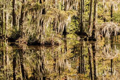 Designs Similar to Carolina Swamp