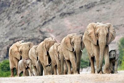 Designs Similar to Desert-adapted Elephants