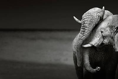 Designs Similar to Elephants Interacting