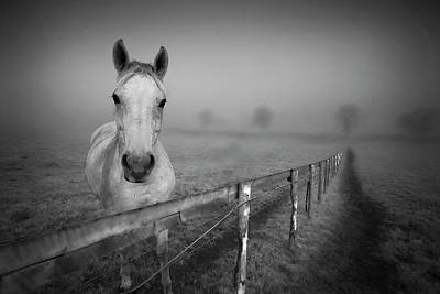 Horse At Fence Prints